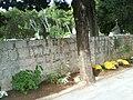 Groblje Korčula05518.JPG
