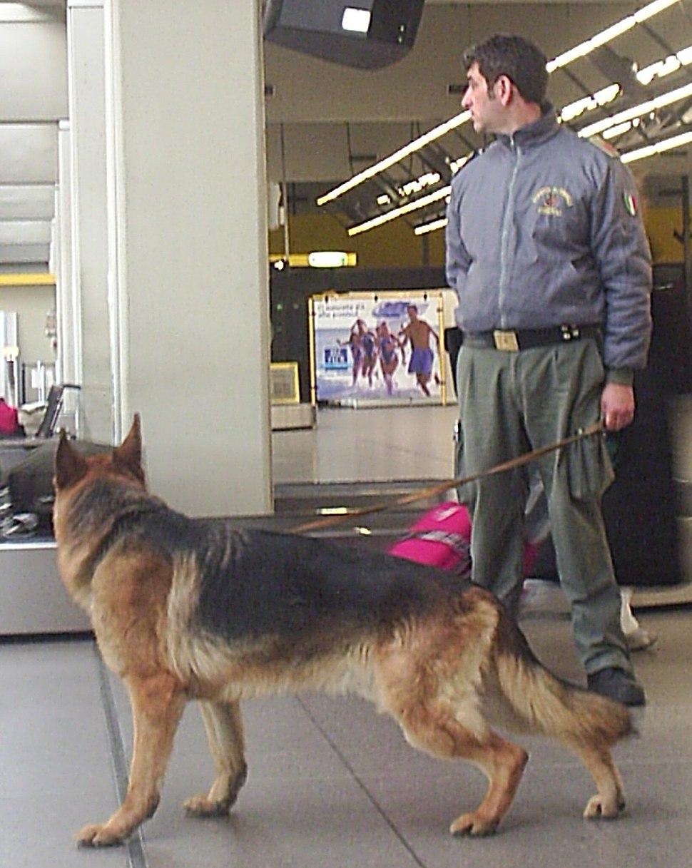 Guardia di Finanza - Cinofili (K9) - Malpensa