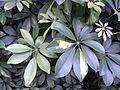 HK 駿發花園 Prosperous Garden 8 green leaves 3.jpg