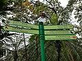 HK ML 半山區 Mid-levels 堅尼地道 Kennedy Road 香港公園 Hong Kong Park flora green leaves February 2020 SS2 18.jpg