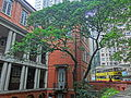 HK Mid-Levels Bonham Road 英皇書院 King's College Fig tree Apr-2013.JPG