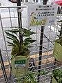 HK SYP 西營盤 Sai Ying Pun 水街 Water Street 小盤栽 green plants October 2020 SS2 02.jpg