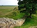 Hadrian's Wall, Sycamore Gap - geograph.org.uk - 907756.jpg