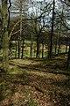 Hag Wood, Great Langdale - geograph.org.uk - 1252110.jpg