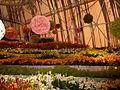 Haifa International Flower Exhibition P1130920.JPG