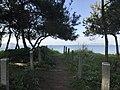 Hakata Bay from Imazu Pine Grove.jpg