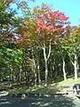 Hakone Ashinoko lake dsc05428.jpg
