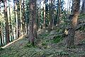 Halver - Bollberg - Wallburg 13 ies.jpg
