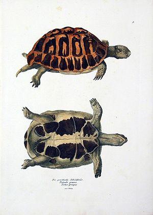Heinrich Rudolf Schinz - Image: Heinrich Rudolf Schinz 13