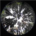 Hemiphoto monarch habitat1.jpg