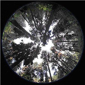 Hemispherical photography - Hemispherical photograph used to study microclimate of winter roosting habitat at the Monarch Butterfly Biosphere Reserve, Mexico.