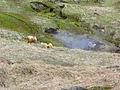 Hengill 24.05.2006 15-14-40.jpg