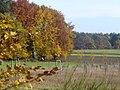 Herbst am Ferschweiler Plateau - geo.hlipp.de - 15162.jpg