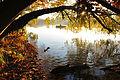 Herbststimmung am Straussee.jpg