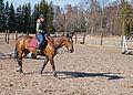 Hevonen harjoittelemassa.jpg