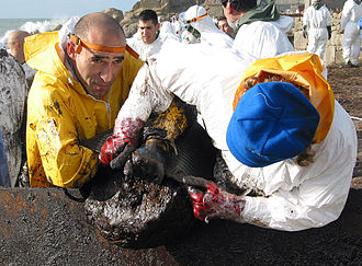 Prestige oil spill - Volunteers cleaning the coastline in Galicia in the aftermath of the Prestige catastrophe, March 2003