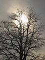 Hochnebel Baum Wismat.jpg