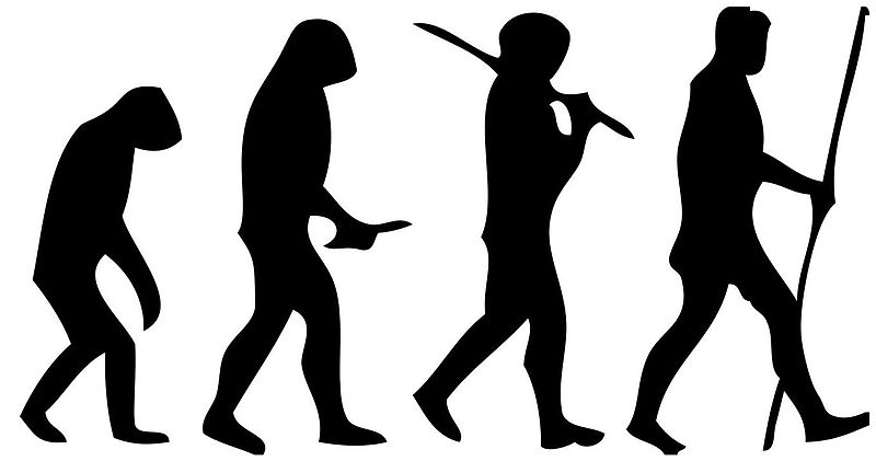 Human evolution scheme wikipedia