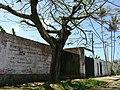 Iguape - SP - panoramio (227).jpg