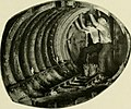 """Image from page 244 of """"Bulletin - United States National Museum"""" (1877).jpg"""
