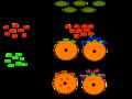 Immune Response to Exotoxins.png
