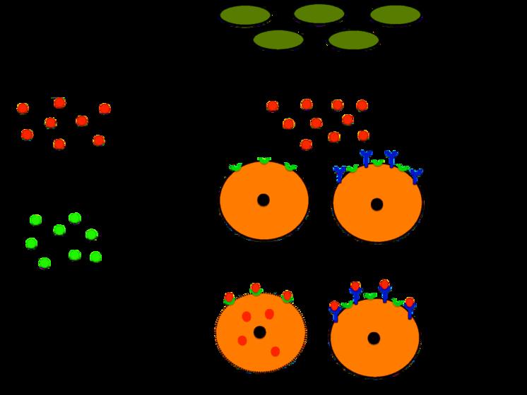 Exotoxina - Exotoxin - qaz.wiki