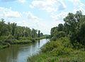 In de Biesbosch 4.jpg