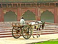 India-6255 - Flickr - archer10 (Dennis).jpg