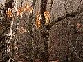 Invierno 2011 en Tejera negra - panoramio (6).jpg