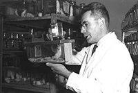 Isaac Berenblum 1951.jpg