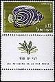 Israeli stamps 1963 - Sea fish - Pomacanthus Imperator.jpg