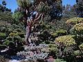 Japanese Gardens-3.jpg