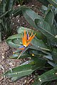 Jardim Botânico da Madeira DSC 0396 (14719958673).jpg