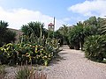 Jardin Botánico de Rodalquilar - panoramio.jpg