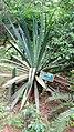 Jardin Botanique et Zoologique de l'Université d'Abomey-Calavi ( Flore ) 18.jpg