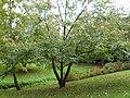 Jardins du château de Josselin - 14.jpg