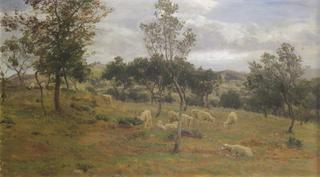 Italian Landscape with Olive Trees. Sora.