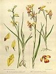 Joseph Dalton Hooker - Flora Antarctica - vol. 3 pt. 2 plate 105 (1860).jpg
