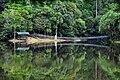 Jungle Reflections - panoramio.jpg
