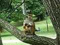 Kandi jardin botanique de Peradeniya (le parc) (4).JPG