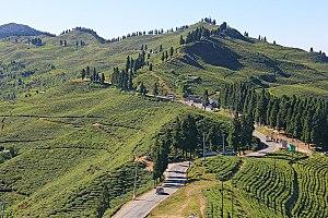 Ilam, Nepal - Kanyam, the most popular tourist destination that offers best tea gardens with wonderful landscape