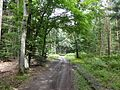 Karbower Wald (2).jpg