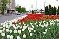 Kazan, Tulip - panoramio.jpg