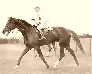 Kennaquhair (horse) Australian-bred Thoroughbred racehorse