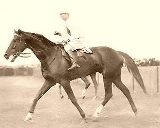 Kennaquhair (horse) - Image: Kennaquhair