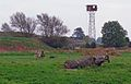 Kibworth Shooting Ground - geograph.org.uk - 587863.jpg