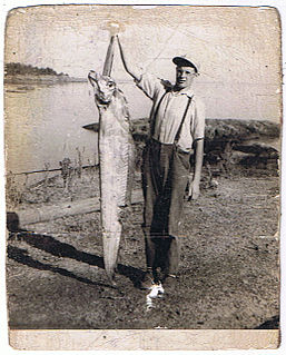 King-of-the-salmon species of fish