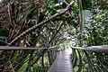 Kirstenbosch Botanical Garden-3116.jpg
