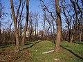 Kiserdő, háttérben az EVIG - panoramio.jpg