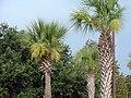 Kissimmee, Orlando (440137) (9474654841).jpg